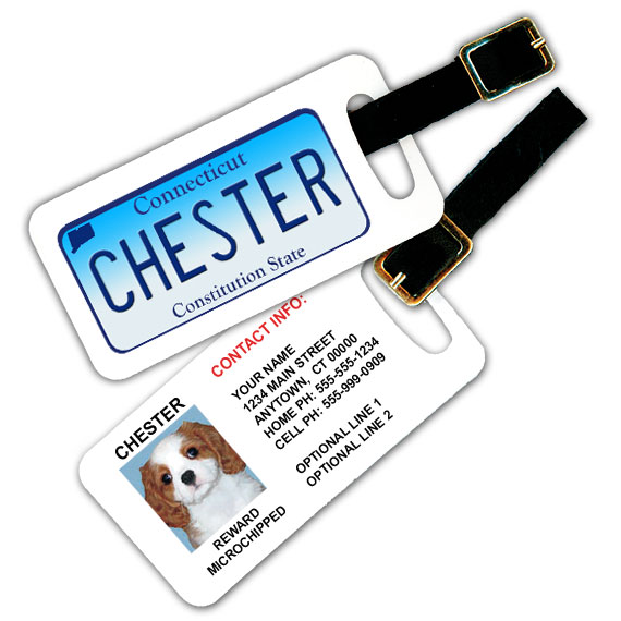 Connecticut License Plate Pet Luggage Tag