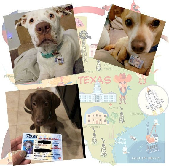 Texas Driver License Pet ID Tag Customer Photo