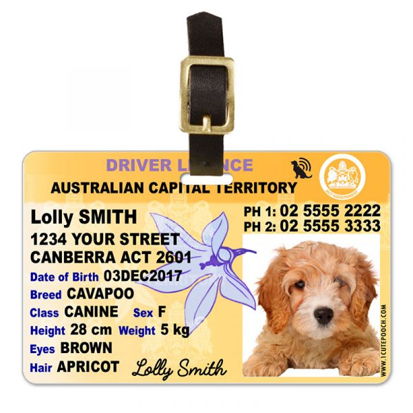 Australian Capital Territory Licence Plate Pet Luggage Tag