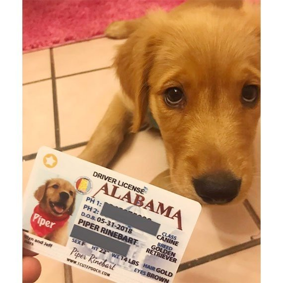 Alabama Driver License Pet ID Tag Customer Photo