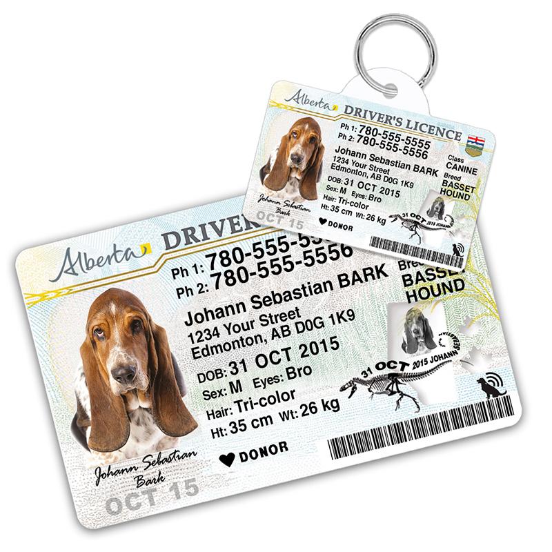alberta driver license pet id tag 800