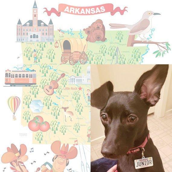 Arkansas License Plate Pet ID Tag Customer Photo