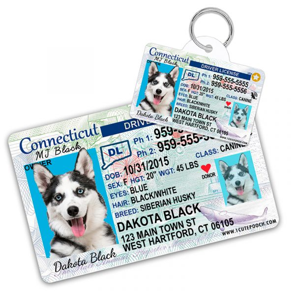 Connecticut Driver License Wallet Card and Pet ID Tag