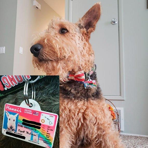 Hawaii Driver License Pet ID Tag Customer Photo