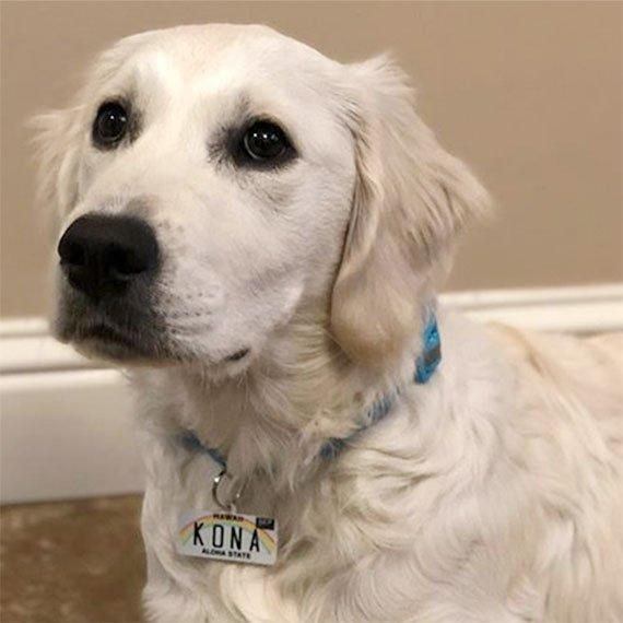 Hawaii License Plate Pet ID Tag Customer Photo