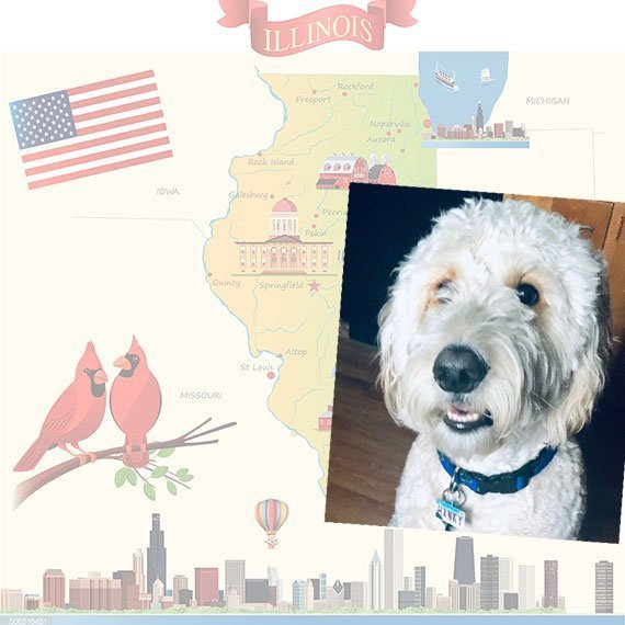 Illinois License Plate Pet ID Tag Customer Photo