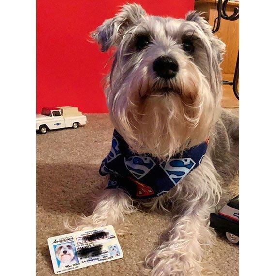 louisiana driver license customer photo