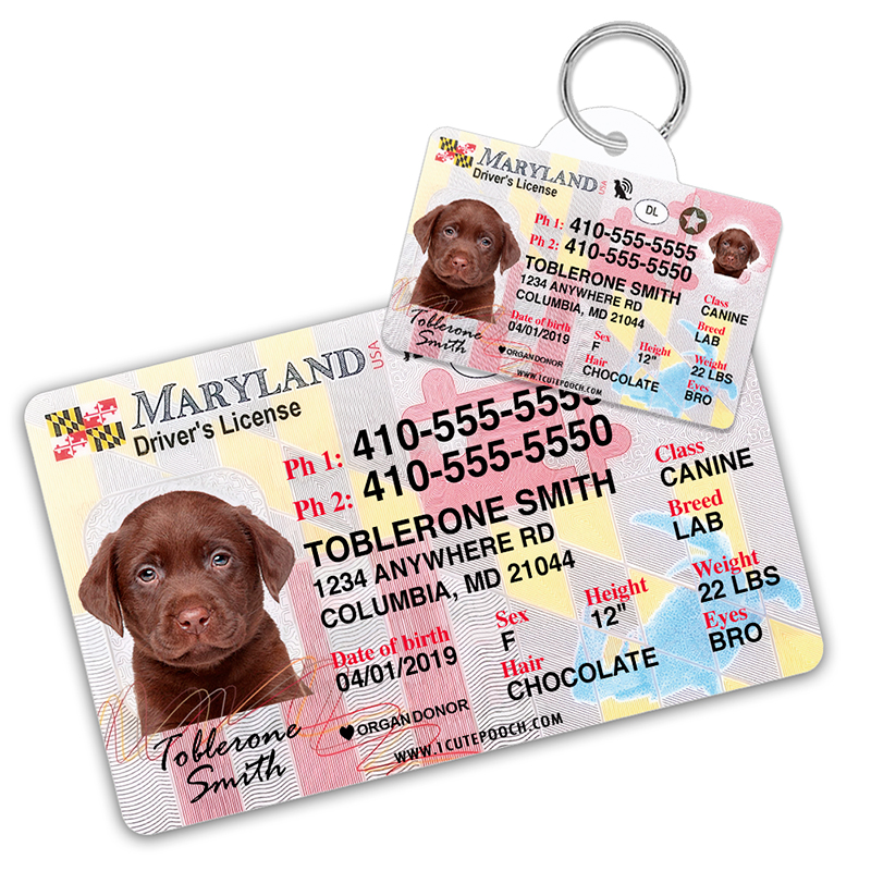 Maryland Driver License Wallet Card and Pet ID Tag