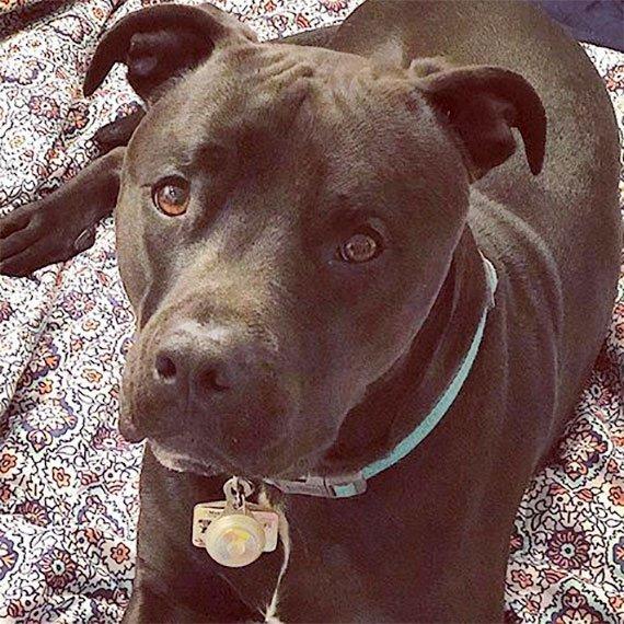 maryland pet driver license customer photo