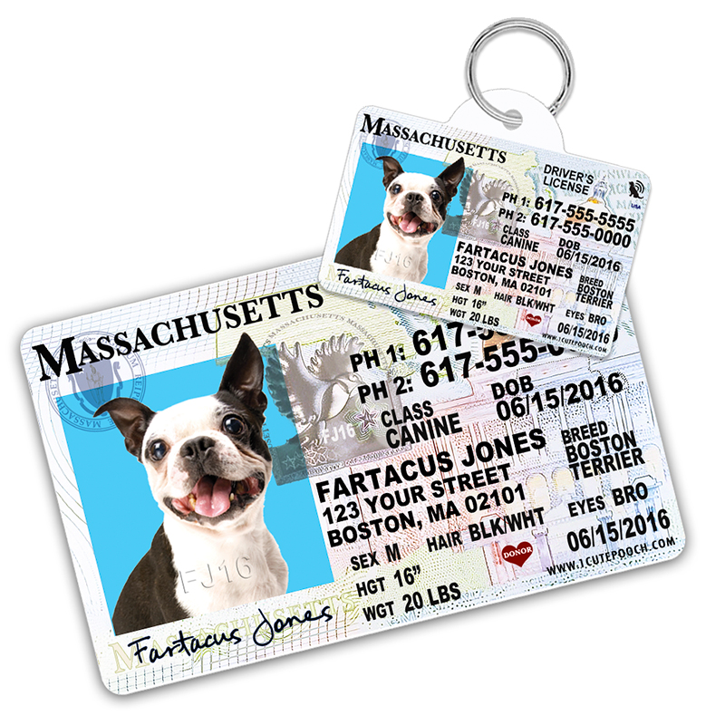 Massachusetts Driver License Wallet Card and Pet ID Tag