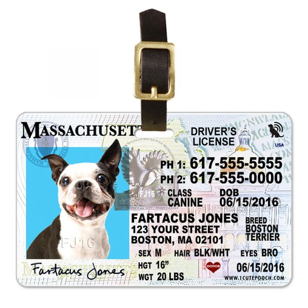 Massachusetts Driver License Pet Luggage Tag