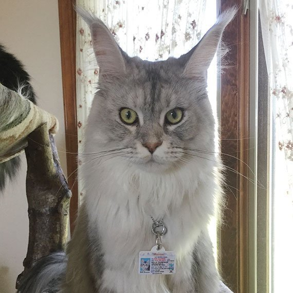 Missouri Driver License Pet ID Tag Customer Photo