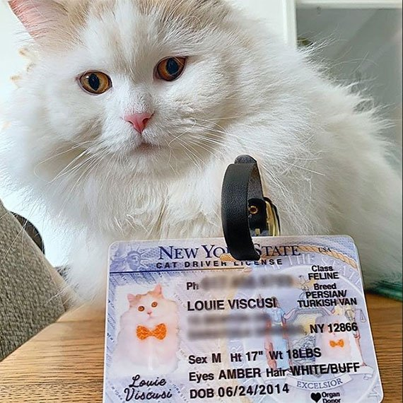New York Driver License Pet ID Tag Customer Photo