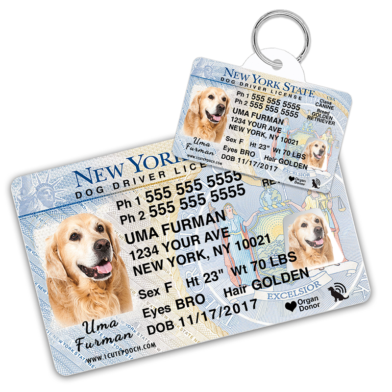New York Driver License Wallet Card and Pet ID Tag