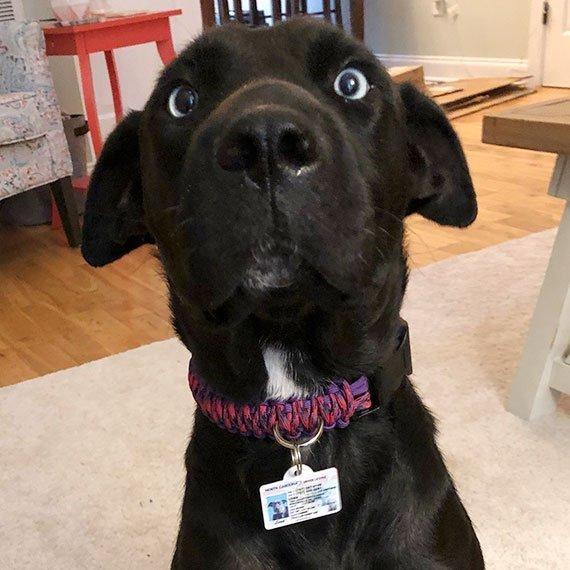 North Carolina Driver License Pet ID Tag Customer Photo