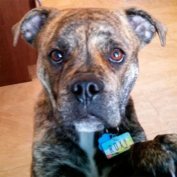 Ohio License Plate Pet ID Tag Customer Photo