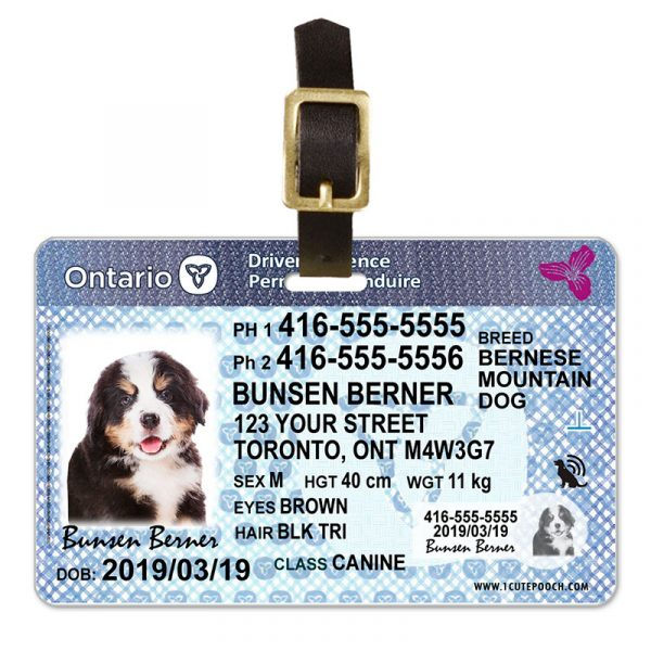Ontario Driver Licence Pet Luggage Tag
