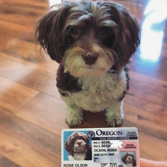 oregon driver license customer photo1