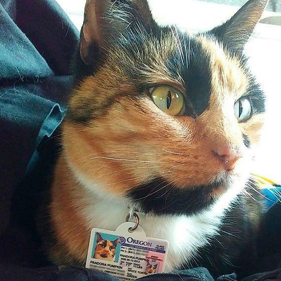 oregon driver license customer photo2
