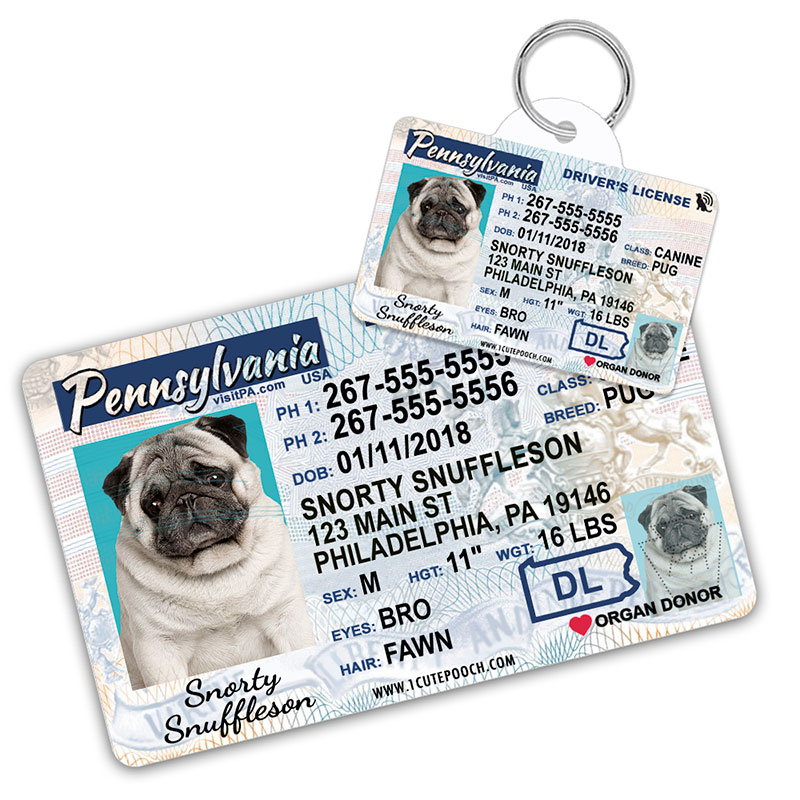 Pennsylvania Driver License Wallet Card and Pet ID Tag