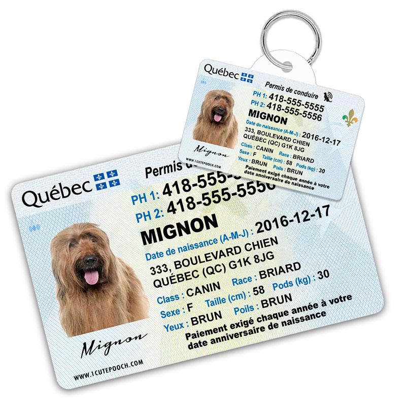 quebec pet driver license id tag 800