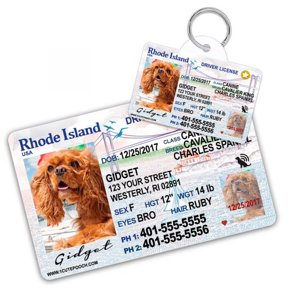 Rhode Island Driver License Wallet Card and Pet ID Tag