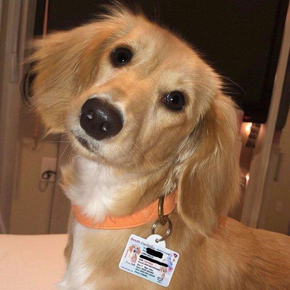 South Carolina Driver License Pet ID Tag Customer Photo