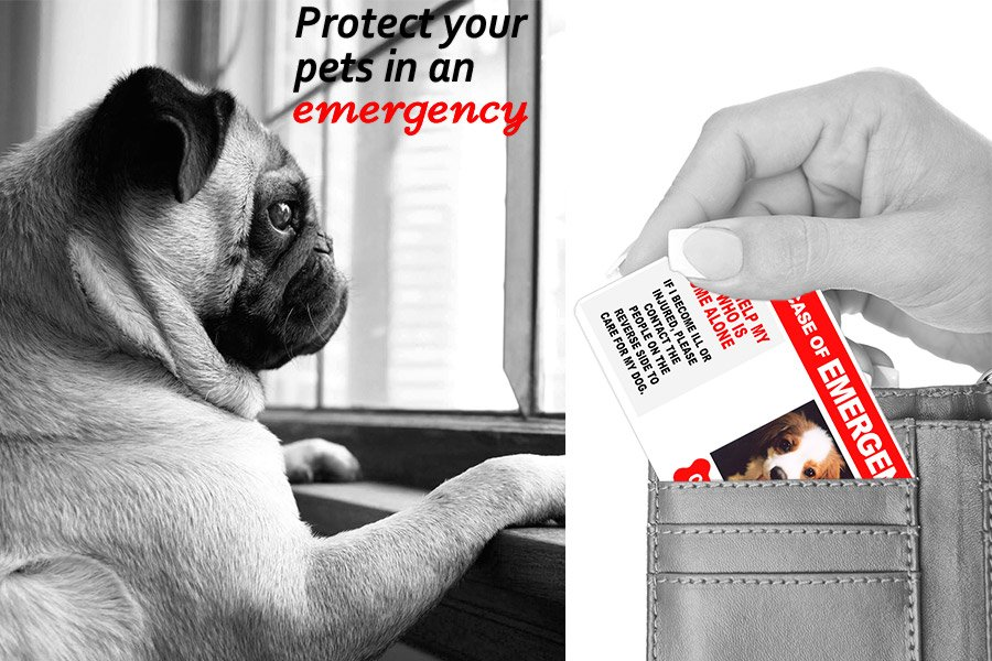 1 Cute Pooch Shop Pet Emergency Card