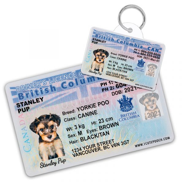 British Columbia Pet Driver License Wallet Card and ID Tag
